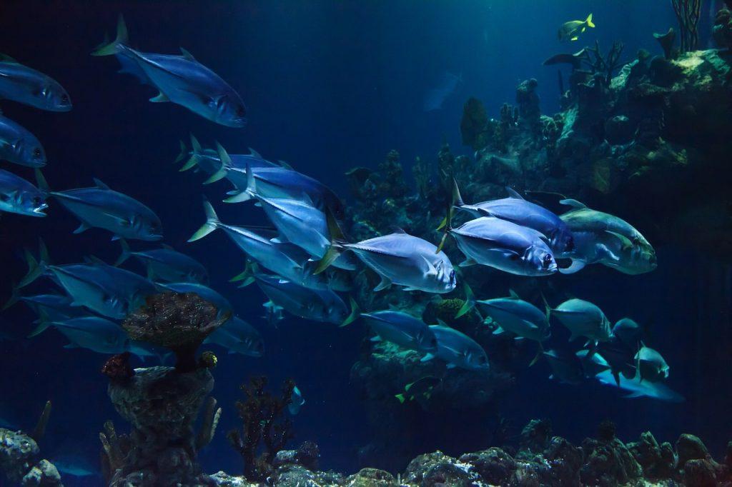 Aquariumspeciaalzaak Arnhem