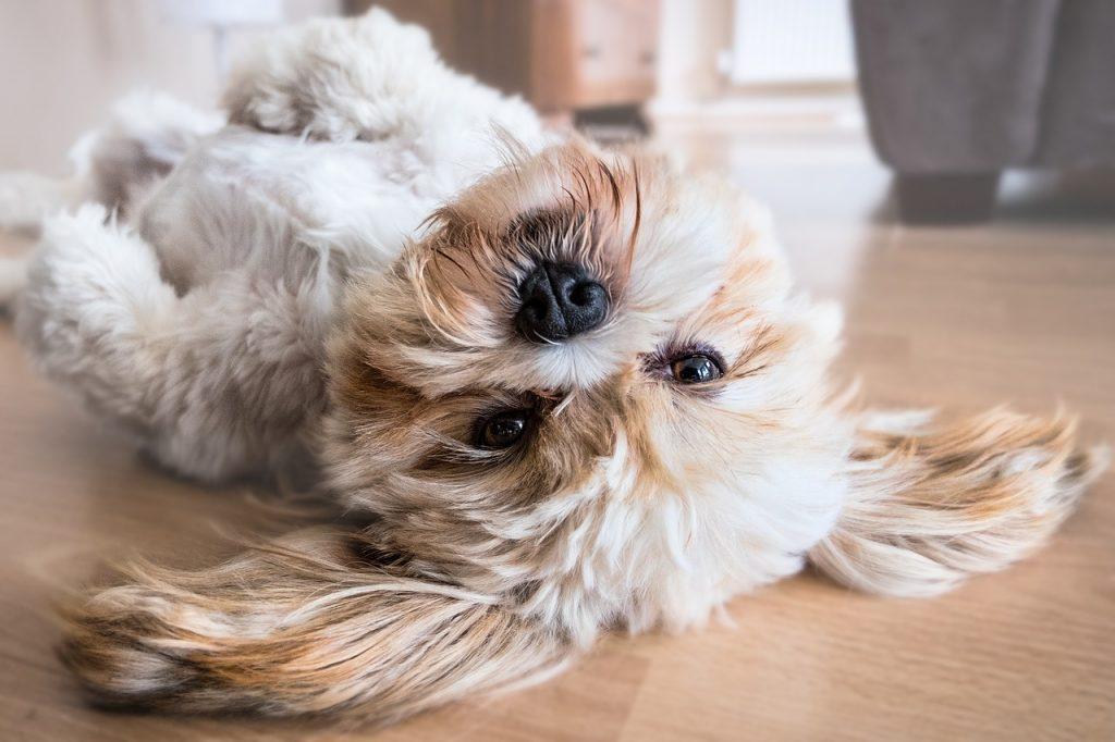 Onverwoestbaar hondenspeelgoed