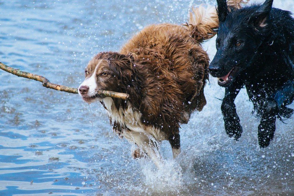 Hondenbrigade Rotterdam