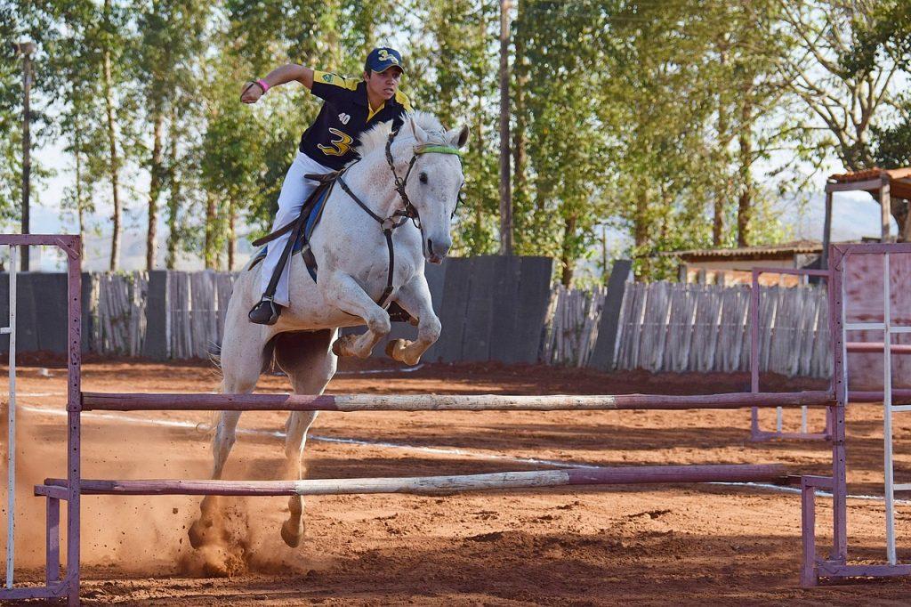Coaching met paarden Amsterdam